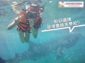 菲律賓語言學校如何選擇順便看鯨鯊