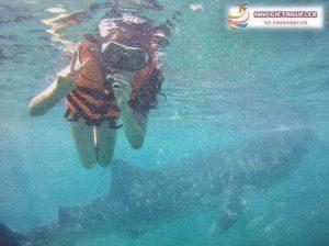 菲律賓看鯨鯊